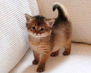 Foto's van de kittens