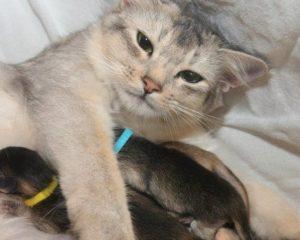 Elfies kittens!