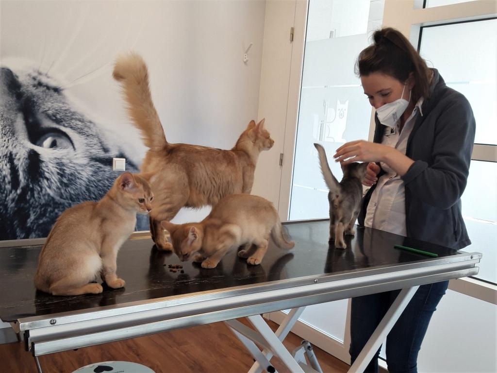 21-05-12 Vaccinatie Y-kittens met Yvette.jpg