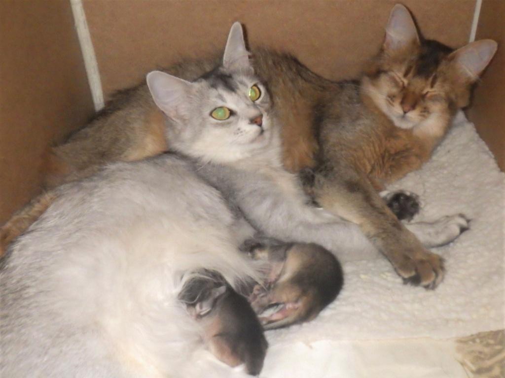 21-09-03 Tinka en Nicky met Z-nest.jpg