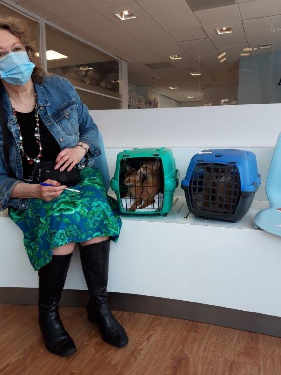 20-10-22 Suzan met X-kittens bij de dierenarts _120814.jpg