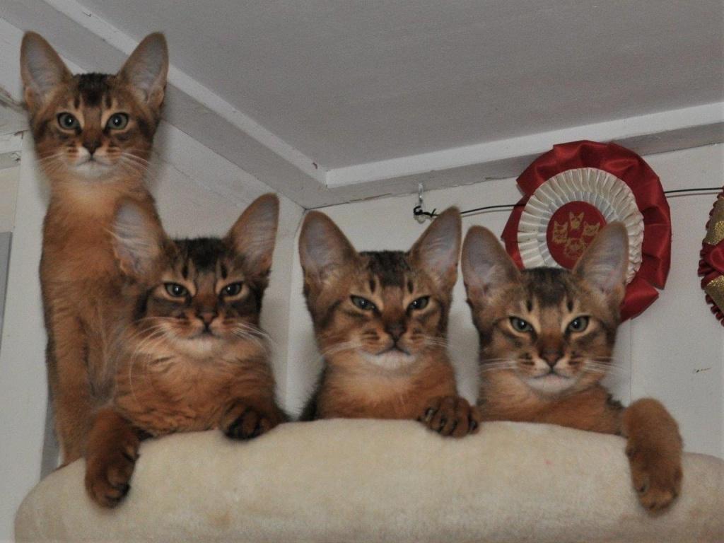 20-10-29 X-nest, Xera, Sheralyn, Tigger en Toulouse DSC_0015.jpg
